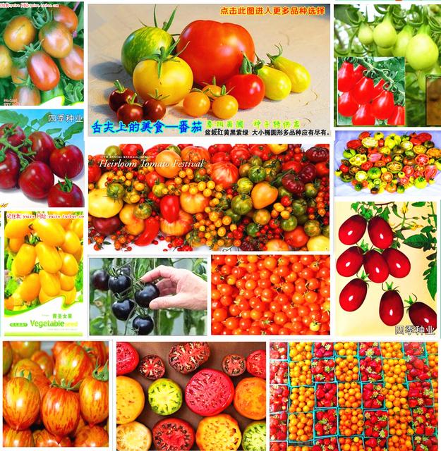 Comprar promoci n 500 unids 11 tipos de - Semillas de frutas y verduras ...