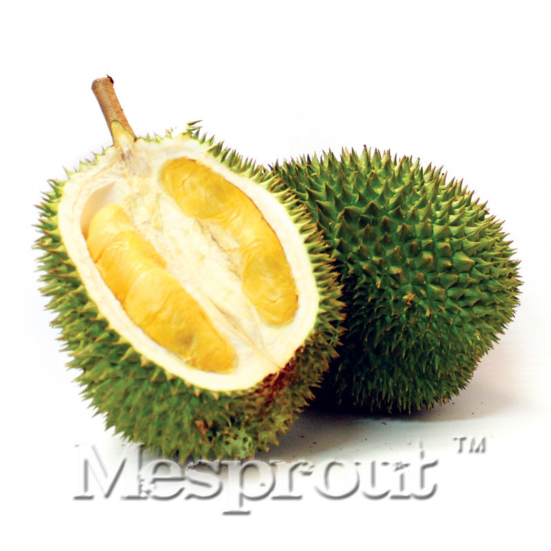 Hot Sale ! 5pcs A Lot Rare Durian Trees Seeds Delicious King Of Fruit Seeds Giant Outdoor Rare Bonsai Plants Free Shipping