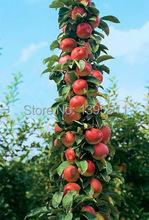 30 pcs Bonsai Apple Tree Seeds rare fruit bonsai tree-- indoor plant for home garden free shipping via hongkong post airmail(China (Mainland))