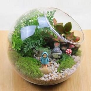 diam tre 20 cm oblique ouverte verre terrarium vase cr ative bureau hydroponique plantes. Black Bedroom Furniture Sets. Home Design Ideas