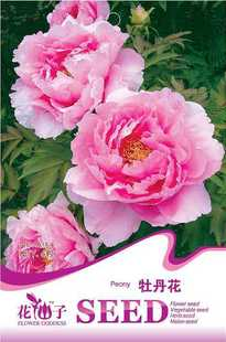 Hot selling Seeds Peony 30pcs indoor bonsai flower plant DIY home garden free shipping(China (Mainland))