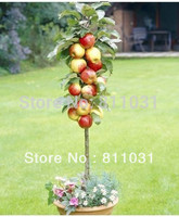 10pcs Hot Selling Bonsai Apple Tree Seeds for DIY Home Garden Fruit Tree Seeds Free Shipping