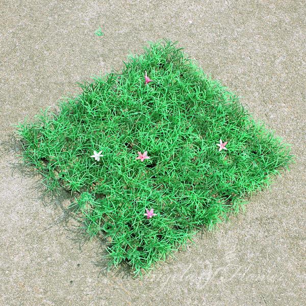 Entreprises de fleurs promotion achetez des entreprises de for Plante herbe haute