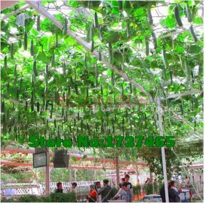 Pomodoro albero di piante acquista a poco prezzo pomodoro for Piante a poco prezzo