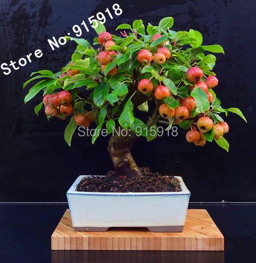 arbres fruitiers mini promotion achetez des arbres. Black Bedroom Furniture Sets. Home Design Ideas