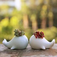 Jingdezhen ceramic flower pot meat flower pot coins grass flower pot desktop plants bonsai home decor