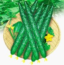 Быстрая бесплатная доставка 1 Упак. 200 Огурцы Семена Cucumis Sativus Огурчик Семена, зеленые растительные Семена сад(China (Mainland))