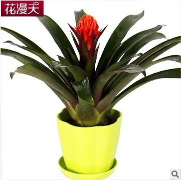 La ananas haut de gamme bureau bureau fleurs en pot plantes en pot plantes purification de l 39 air - Pot de fleur en levitation ...