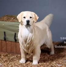 3 cores mr. z 1/6 escala golden retriever animal cão modelo de brinquedo para 12 polegadas figura ação acessórios coleções(China)