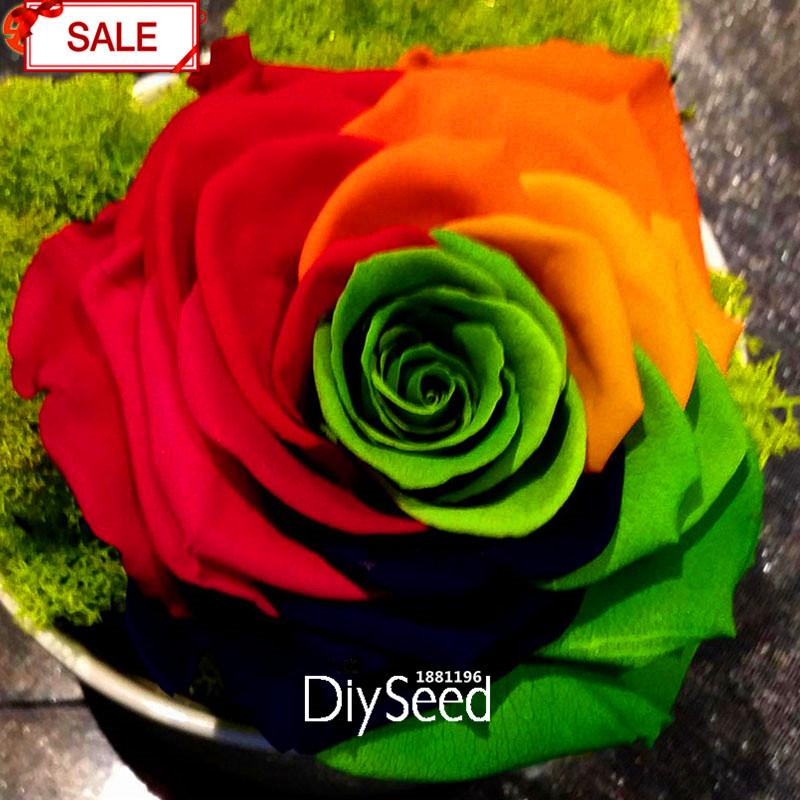 novas Sementes Frescas DIY Início Jardim Colorido Rosa Flor Da Planta