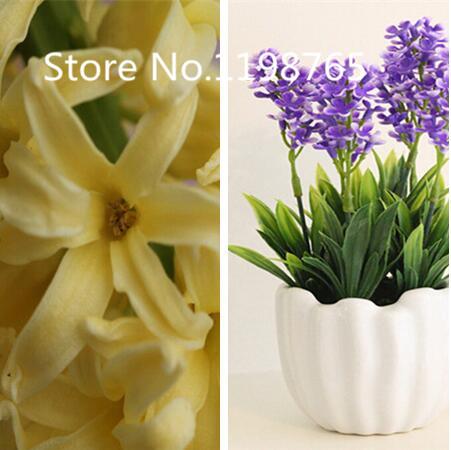 jacinthe semences promotion achetez des jacinthe semences promotionnels sur. Black Bedroom Furniture Sets. Home Design Ideas