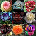 100pcs 24 Colors Fresh Rare ROSE Seeds Bonsai Flower Plant Seeds