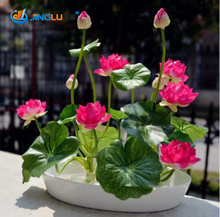 5 Pcs / Bag , Lotus Seeds , Flower Seeds, Diy Potted Plants, Indoor / Outdoor Pot Seed Germination Rate Of 95% Mixed Colors