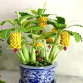 To get coupon of Aliexpress seller $5 from $20 - shop: china seeds in the category Home & Garden