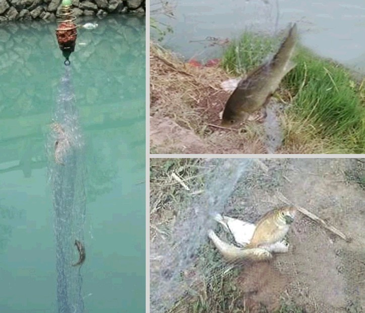 как ловить рыбу весной на сетку