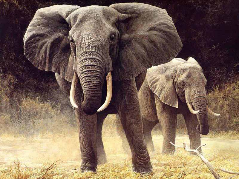 Buy Elephant Painting
