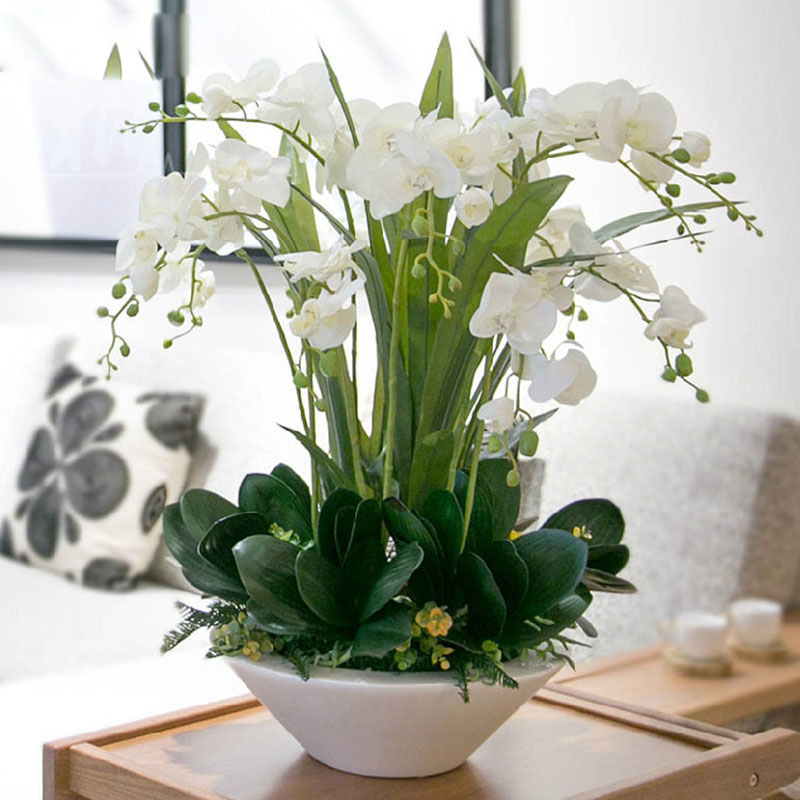 popular white orchid plants buy cheap white orchid plants lots from china white orchid plants. Black Bedroom Furniture Sets. Home Design Ideas