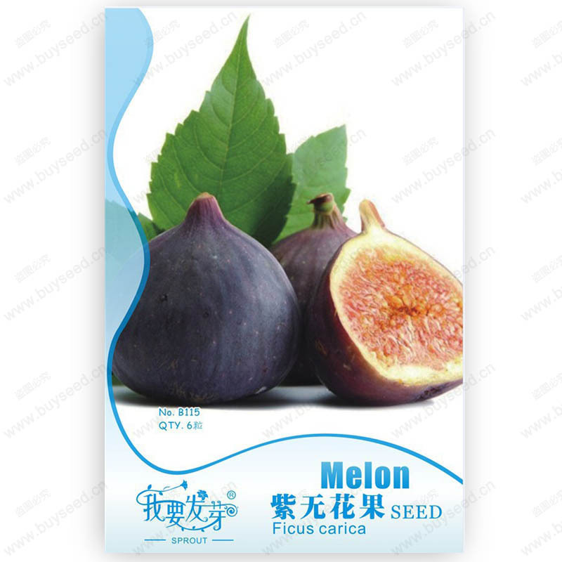Original Pack 6 Seeds / Pack, Ficus carica Linn tree seeds,Purple figs seeds, fruits and vegetables organic fruits(China (Mainland))