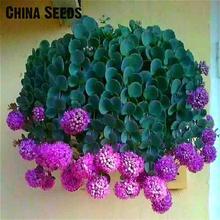 Nuevo Artículo 50 Unids Colgando Semillas de Cebolla de Primavera Rare Purple pequeña Flor del Allium Semillas Balcón Interior Perenne Follaje de Flores Olla.(China (Mainland))