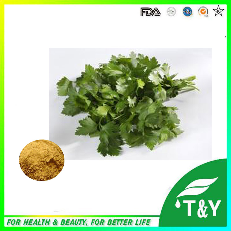 Hot sale Parsley extract/Apigenin/Parsley leaf extract/Delay aging plant extract 600g/lot