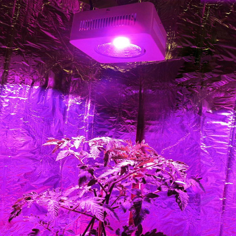 2PC/ LOT low-energy Concentrated better COB 200w Led Grow Light Full Spectrum Grow Leds Hydroponic Lighting for Medicinal Plants(China (Mainland))