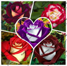 50 New Rose Seeds,20 Different Colors Rare Osiria Rose ,Professional Packing,Heirloom Chinese Rose Flower Seeds(China (Mainland))
