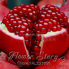 20 pcs/bag Giant Pomegranate seeds home plant Delicious fruit seeds very big and sweet for home garden plant