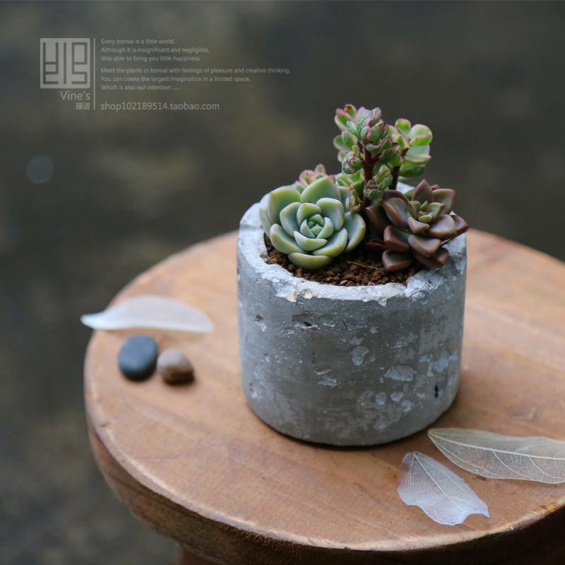 freeshipping 8x8x6.5cm Fashion flower pot meat flower pot totoro ceramic plant bonsai breathable(China (Mainland))