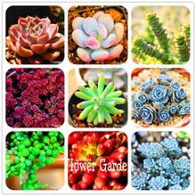 New Seeds 2015!10pcs 99 Kinds to choose Lithops Seeds Succulents Seeds Pseudotruncatella Office Bonsai Flower Seeds,#FRB4RE