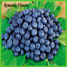 Hat Blueberry Shrub Seeds , Big Diy Home Bonsai Container , Rich In Anthocyanins 100 Particles / Bag(China (Mainland))