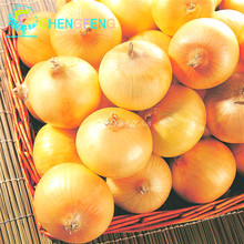 New Delicious 100pcs Giant Onion Seeds Russian Heirloom Vegetables Garden Supplies For Fun Interest DIY(China (Mainland))