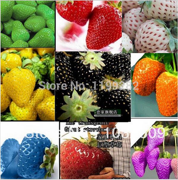 1000 30 tipos de colores de fresa semillas de bonsai for Semillas de frutas y verduras