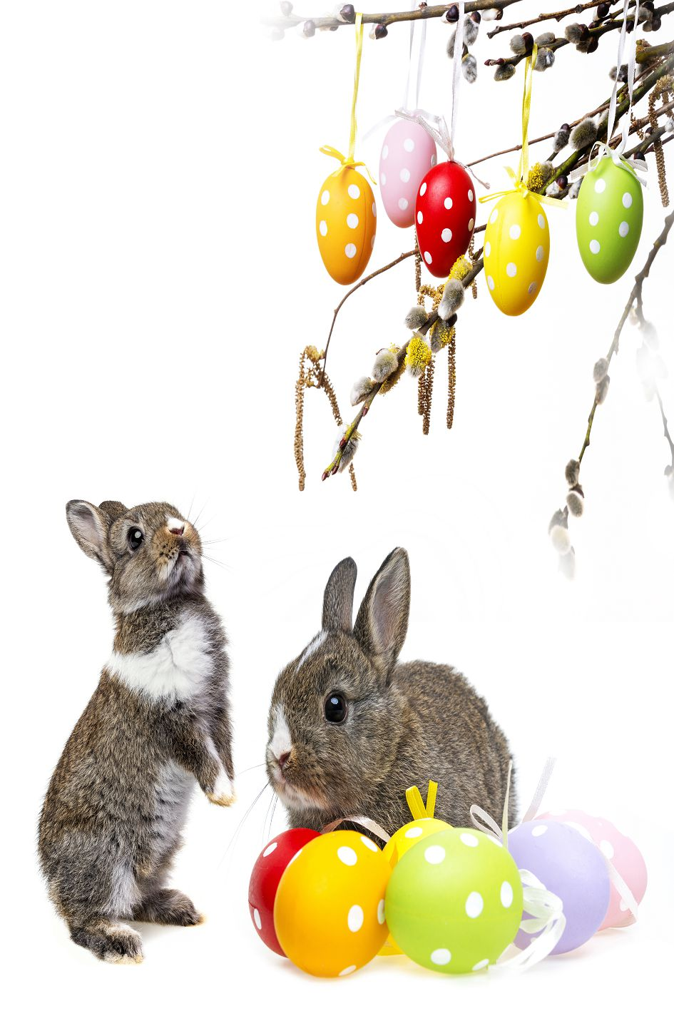 300cm*200cm Easter Day Branches gray rabbit eggs photography background easter photography backdrops ZJ<br><br>Aliexpress