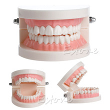 Dental tooth model Early childhood teaching model The teaching model of oral teeth in children(China (Mainland))