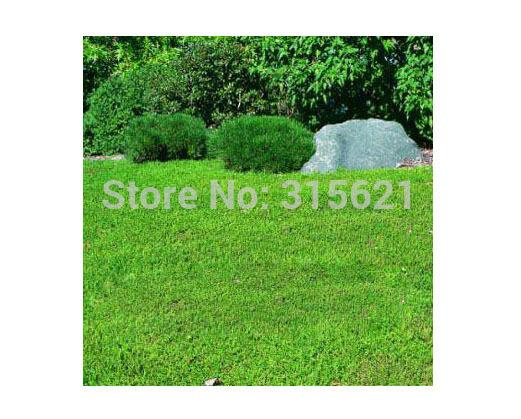 Green Carpet(Herniaria Glabra) Seeds Grass Seeds 50pcs Drought-resistant perennial evergreen dwarf light green(China (Mainland))