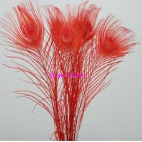 Free Shipping Wholesale 50pcs Red Peacock Feathers 25-30cm 10-12 inches Dyed Peacock Feathers/plumes For Decorations(China (Mainland))