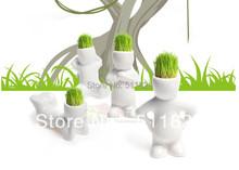 popular mini plant