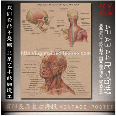 """Top fashion house decoration wall sticker """"Human Anatomy Skeleton""""cuadros art painting for living room decorative 42x30 cm(China (Mainland))"""