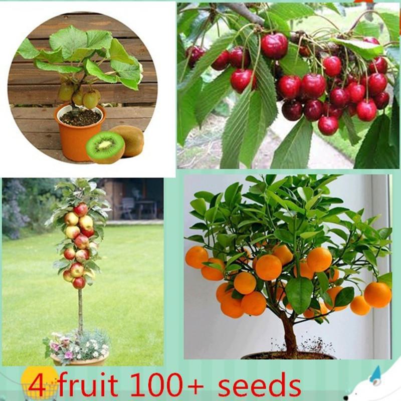 4 kind fruit ,bonsai fruit tree seeds ,vegetable and fruit seeds total 100+ seeds(China (Mainland))