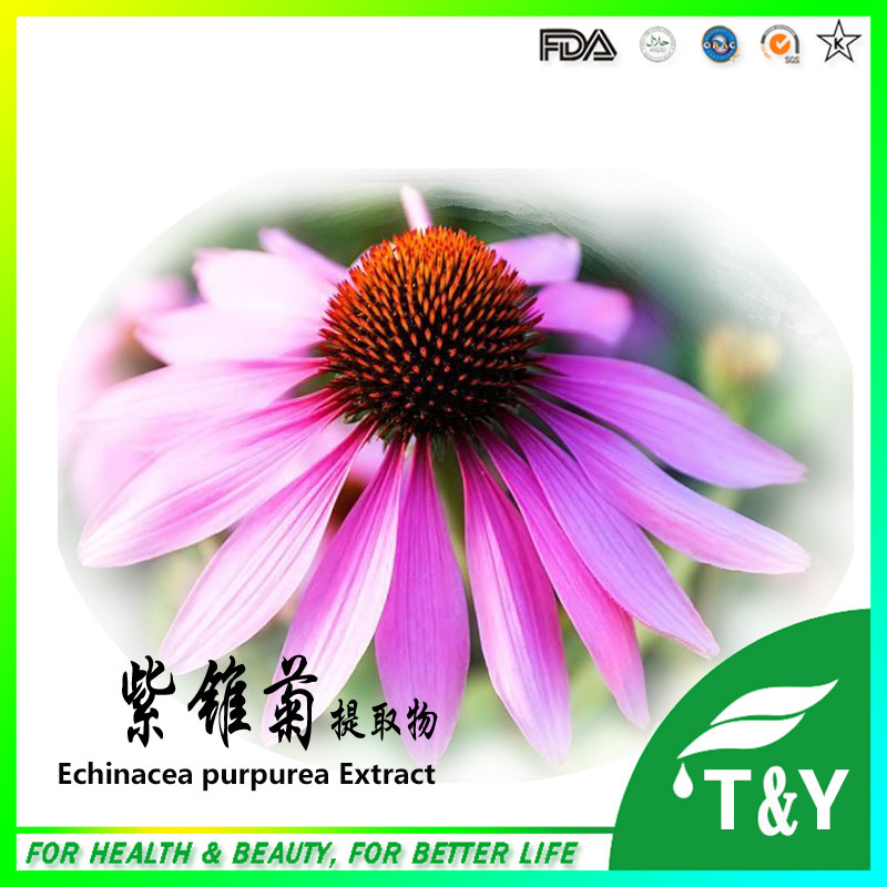 Hot selling echinacea extract chicory acid/polyphenols powder<br><br>Aliexpress