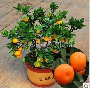 Acquista all 39 ingrosso online piante da frutto in vaso da for Alberi frutta vendita