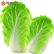 200 pcs Chinese Cabbage Seeds Easy to Grow - Nutritious Green Vegetable Seeds Brassica Pekinensis Plants(China (Mainland))