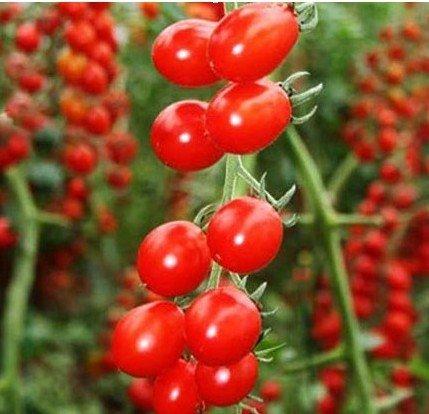 Карликовое дерево Seeds 10pcs/diy карликовое дерево fruit seeds 12