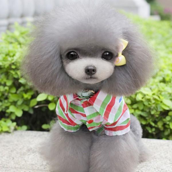 Puppy Pet Dog T Shirt Lapel Plaid Coat Cat Jacket Clothes Apparel Tops S/M/L/XL/XXL(China (Mainland))