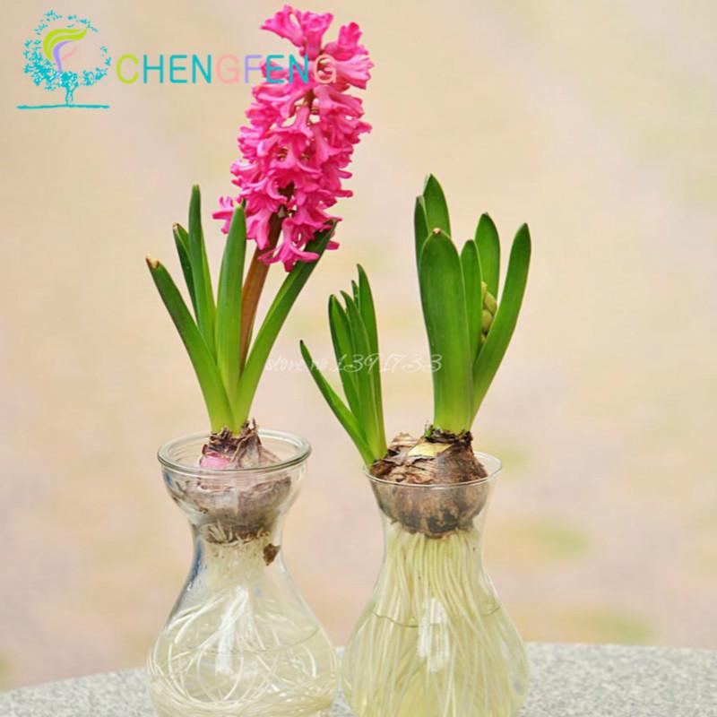 Suelo planta de interior compra lotes baratos de suelo for Jacinto planta interior