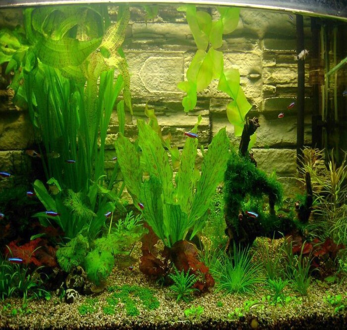 Free shipping 1pcs 300 seeds aquarium grass seeds mix for Easy aquatic plants