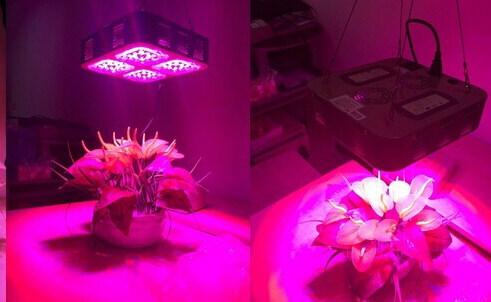 cree led grow light 2013 for indoor plant or greenhouse in grow lights. Black Bedroom Furniture Sets. Home Design Ideas
