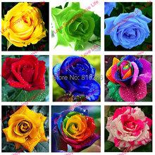 rose flower seeds plants, indoor flower seeds, rose flower – 100 seeds/bag