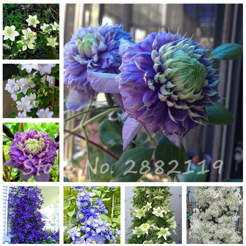 Popular garden view buy cheap garden view lots from china - Plants with blue flowers a splash of colors in the garden ...