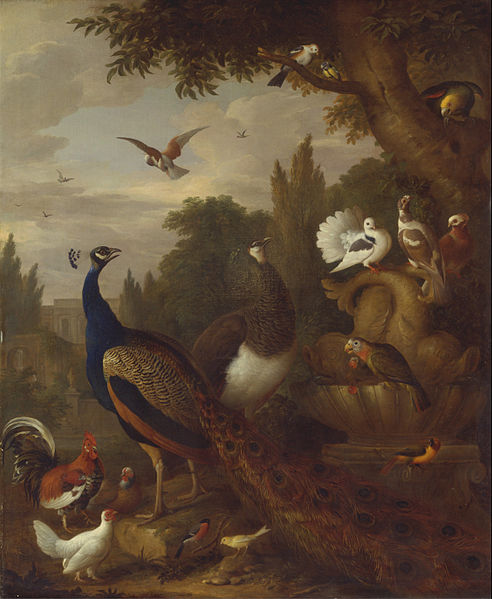 Canvas Art Prints Wall Decor Giclee Oil Painting Jacob Bogdani - Peacock Peahen Parrots Canary And Other Birds In A Park(China (Mainland))